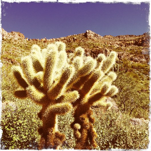 One of the many cool cacti we've seen.