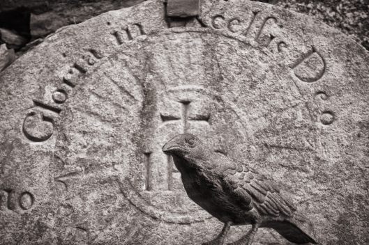 Nevermore in front of a gravestone in the abbey at Glendalough, County Wicklow.